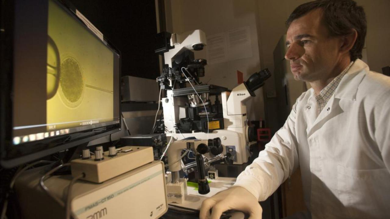 Assistant Professor Pablo Ross using a microscope